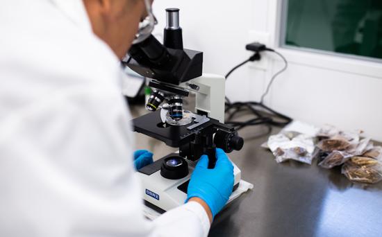 verdure-team-looking-through-microscope-550x342