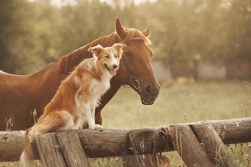 verdure-sciences-animal-health-application